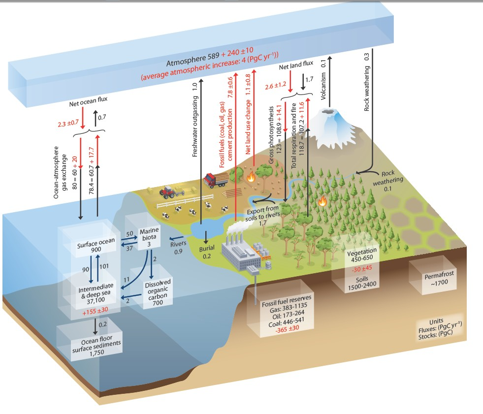 IPCC carbon cycle
