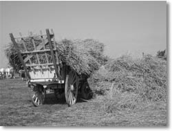 A photo of harvesting