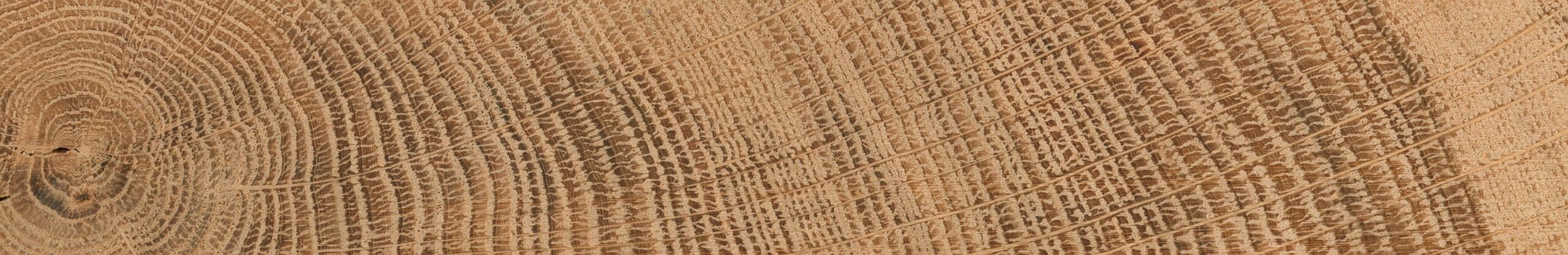 close up of tree rings