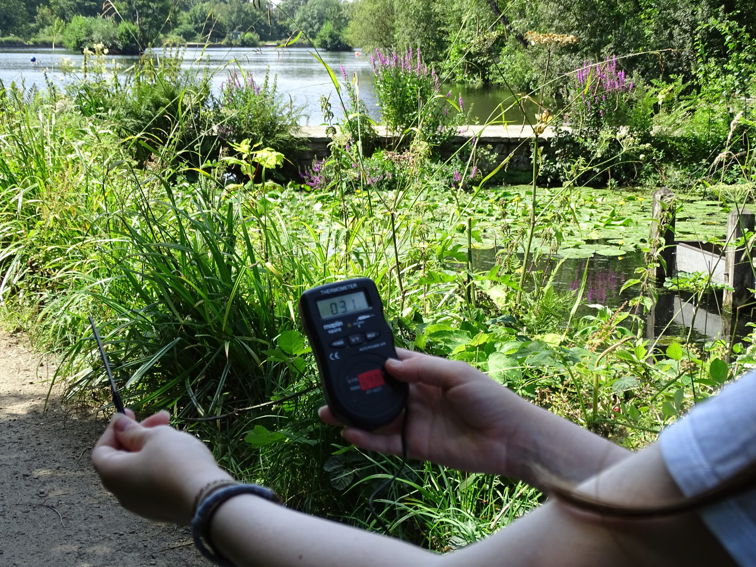 Microclimate thermometer
